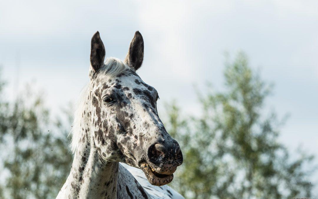 Paarden!